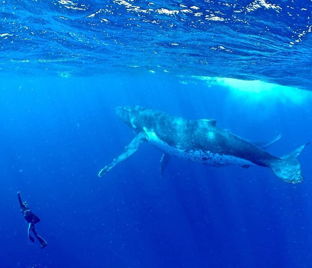 Do you see the baby behind the mother? 🐳 This happened, again and again. I don't know what will top this? And we made a little eye contact too!!! 😁😁😁
