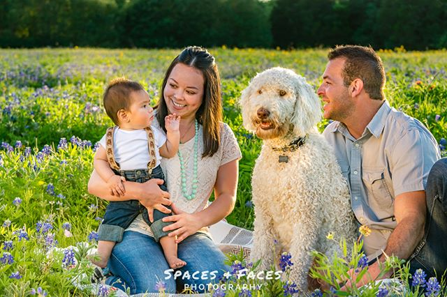 Currently editing this shoot. Suspenders + adorable family + family dog… what's there not to love!  #bluebonnets #texaswildflowers #wildflowers #stateflower #bluebonnetminis #sunsetmini #goldenhour #familyportraits #austinliving #austinlife #austinfamilies #portraitphotography #austinphotographer #austinphotography #spacesandfacesatx #spacesandfaces