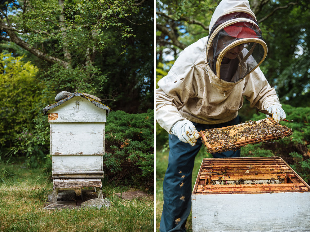 editorial-photography-beekeeping-bees-hive.jpg