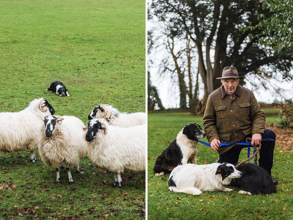 editorial-travel-photography-ireland-portrait-shepherd-dog.jpg