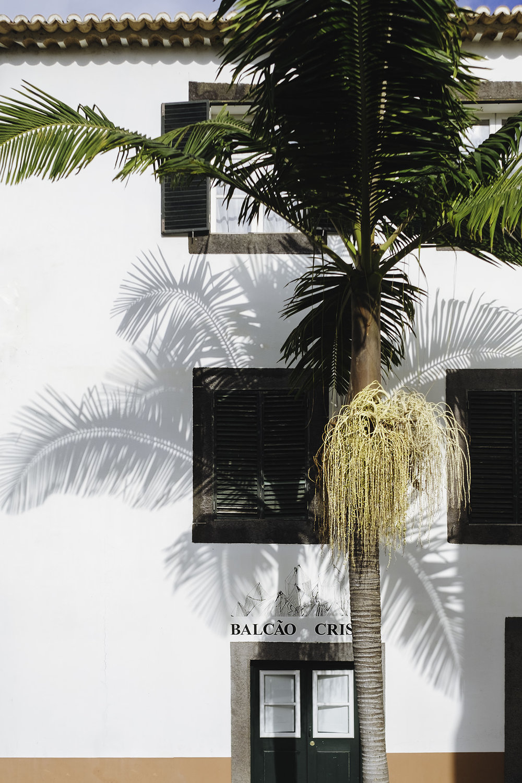 travel-madeira-palmtree.jpg
