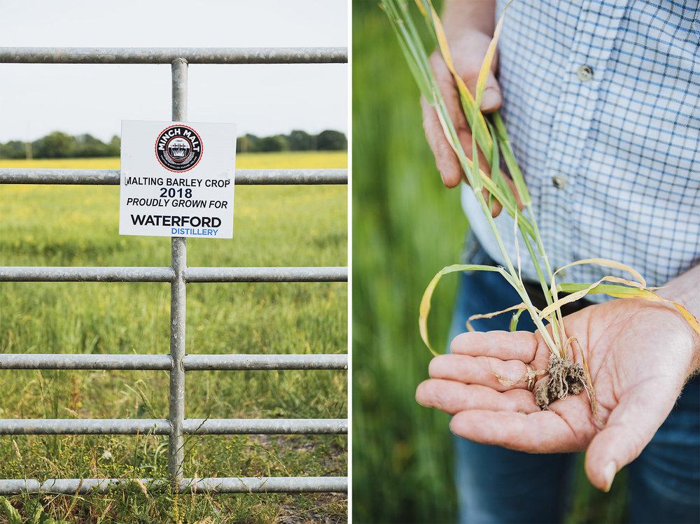bio-dynamic-farmer-whiskey-barley-03.jpg