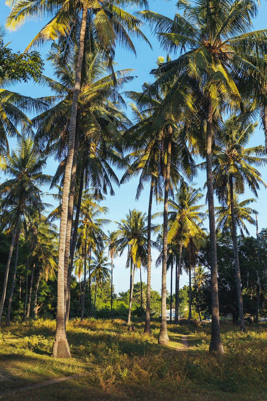 travel-indonesia-gili-air-palmtrees.jpg
