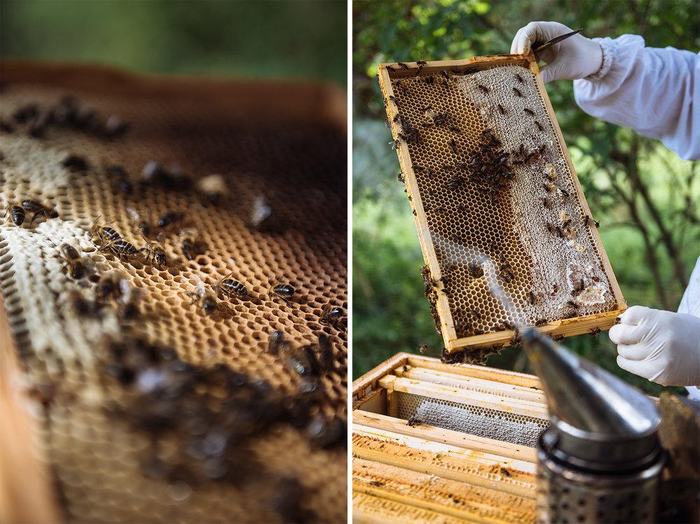 editorial-photography-beekeeping-bees.jpg