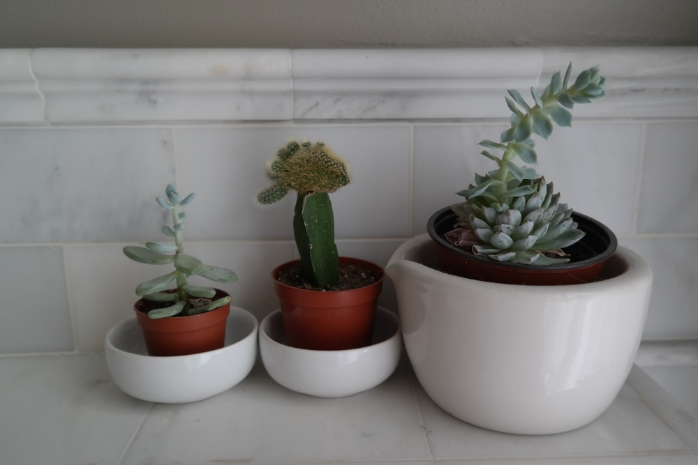 Succulents. These are so fun to mix and match the cacti in the middle is fish shaped i love its personality