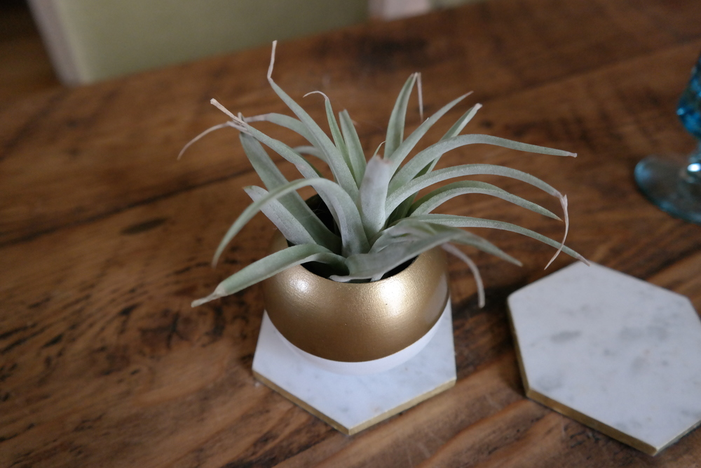 Air plant with planter and coasters from etsy