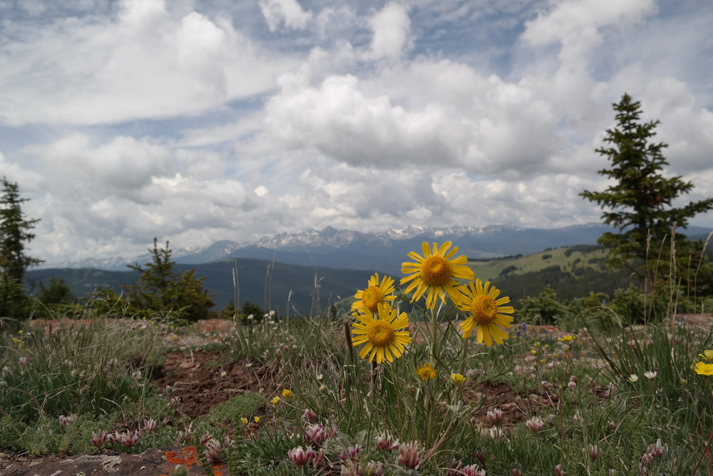 Colorado Shrine Pass hike Intrepid Hearts wanderlusting, the hills were alive...