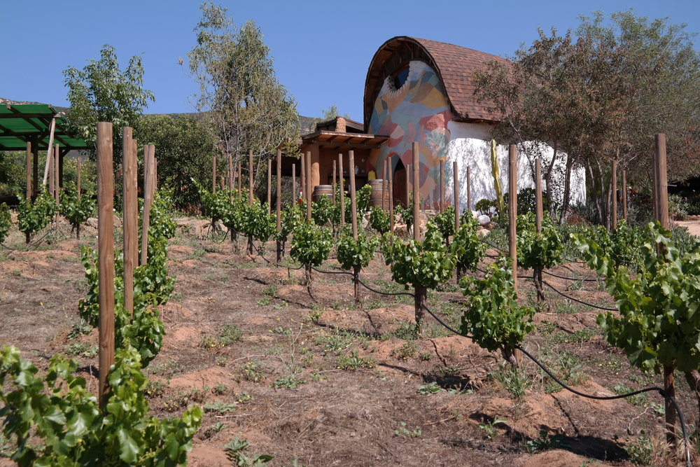 Sol y Barro cob house tasting room created with clay under the Baja sun by owner and winemaker Aimé Desponds