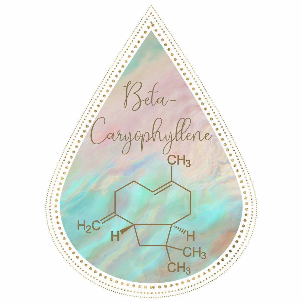 IGimageBetacartophyllen.jpg