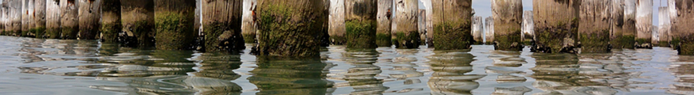 water-logged 05