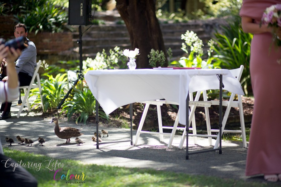 Wedding Photographer Perth Candid UWA Sunken Gardens034.jpg
