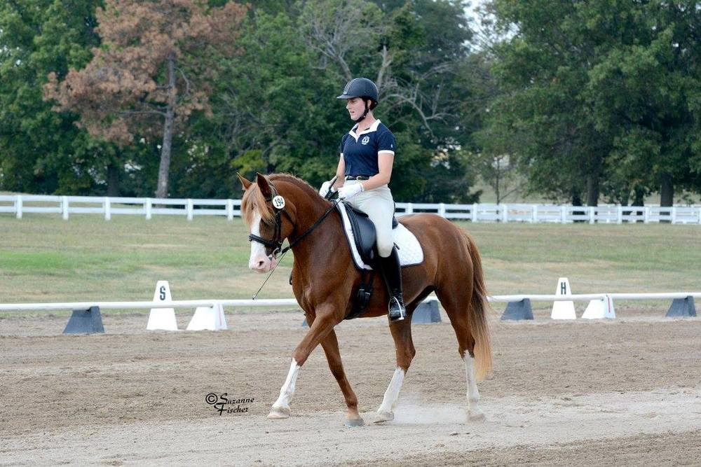 Allie dressage.jpg