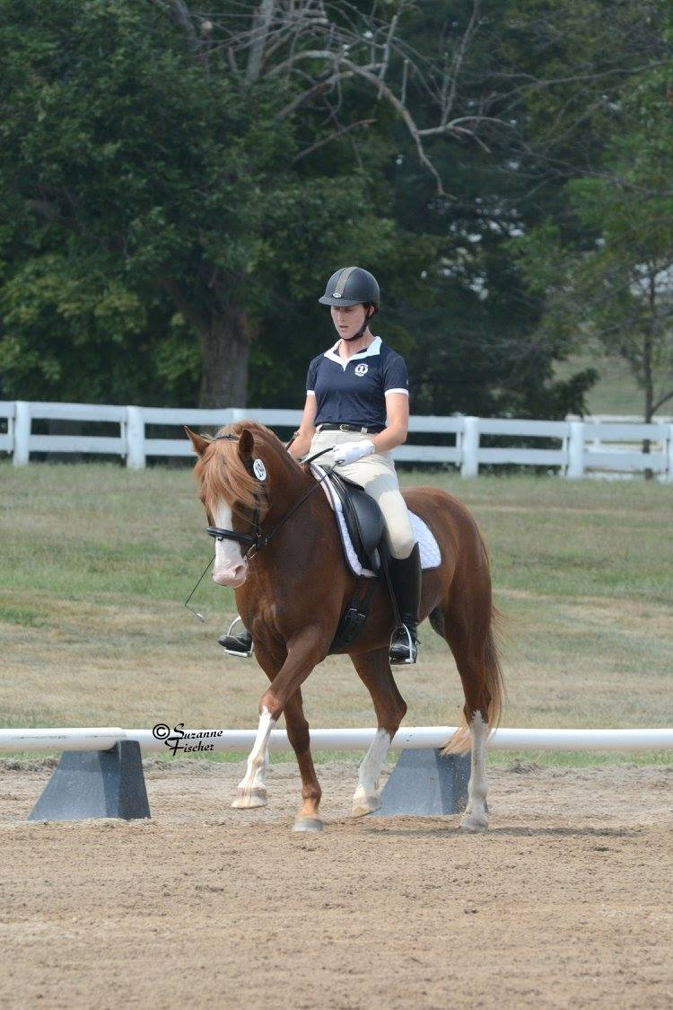 Allie dressage 2.jpg