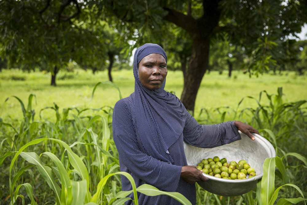 Shea nuts are a key export commodity under the African Growth and Opportunity Act (AGOA). USADF works with smallholder shea producers in Benin to help them connect to regional trade hubs, and get a higher market price for their products.