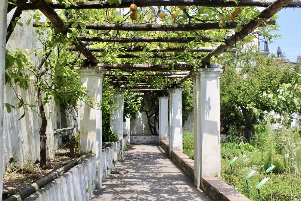 Salerno Medical School Gardens