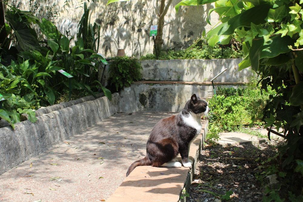 Medical School Gardens at Salerno