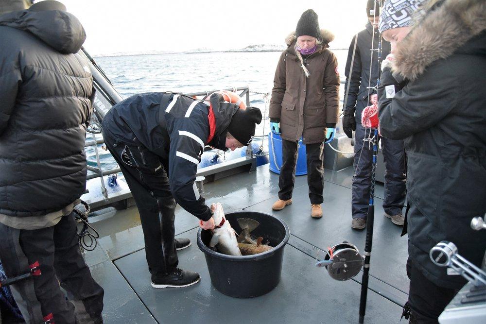 Alltid fisk å få