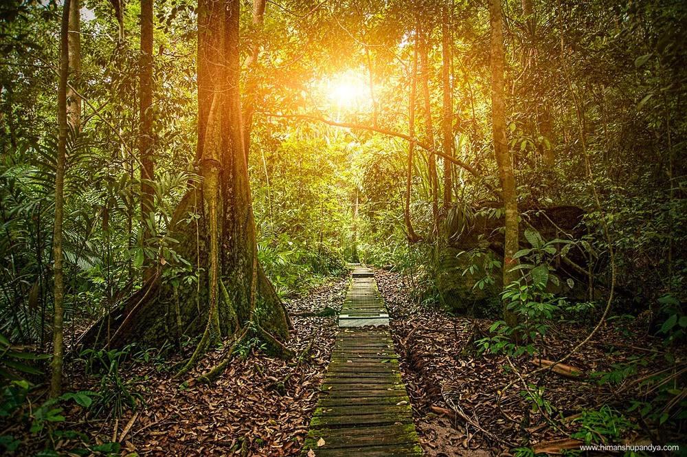 BORNEO, MALAYSIA   see more