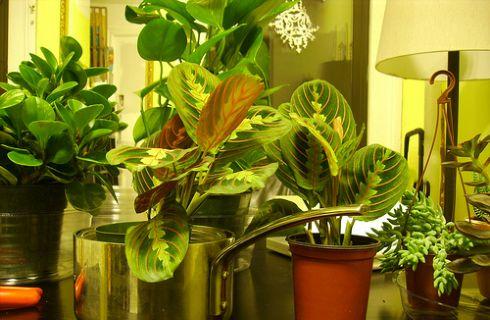 Pianta Ufficio Poca Luce : Pianta da ufficio poca luce piante la migliorano da dei ufficio