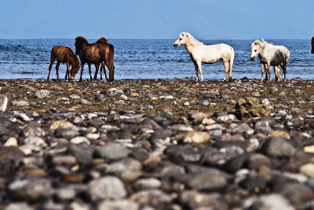 salt water indonesia 3