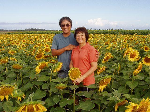sunflower-004-web.jpg