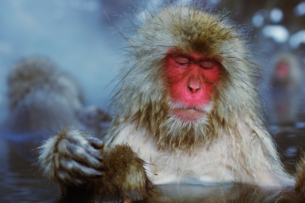 monkey8.jpg