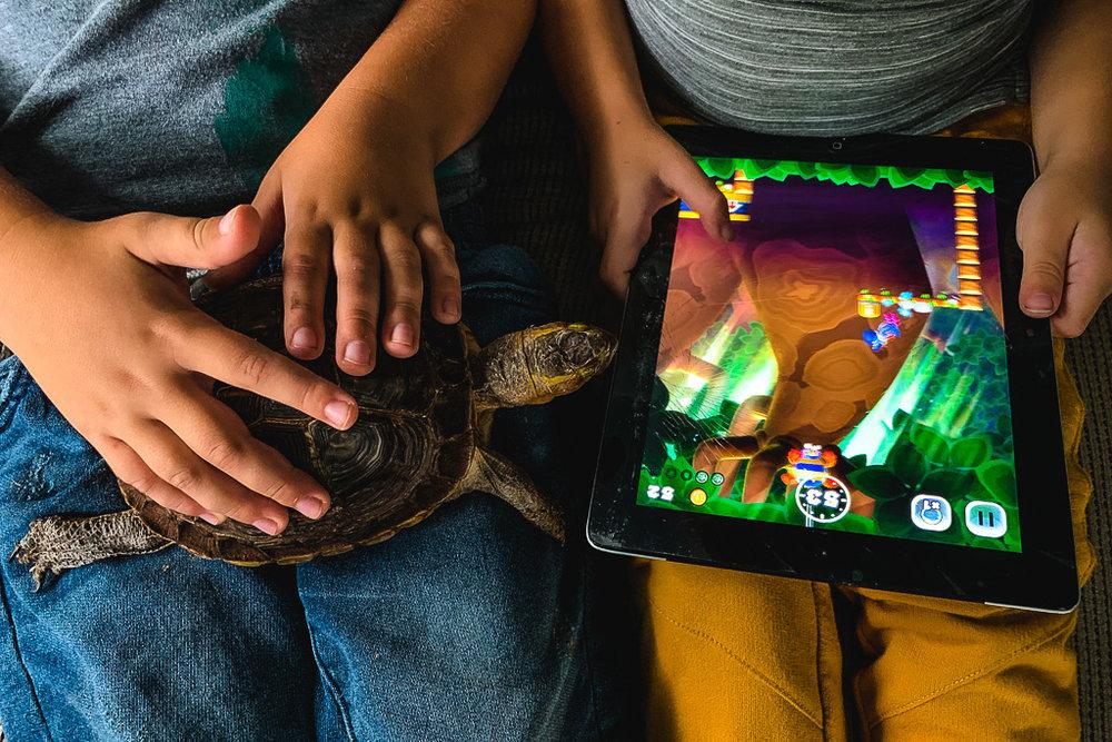 tortoise-turtle-pet-video-games.jpg