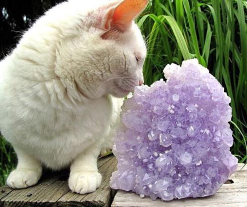 Autumn cat crystal