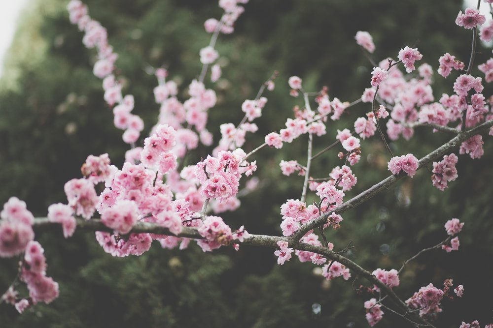 bloom workshops
