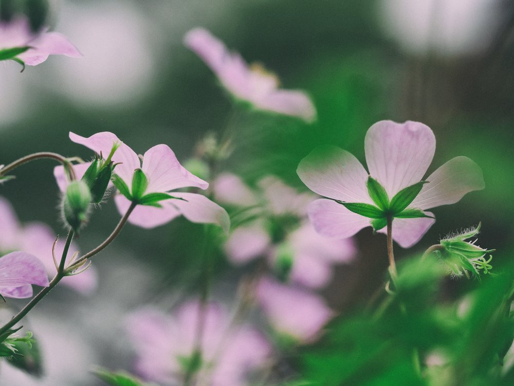 bloom yoga workshops