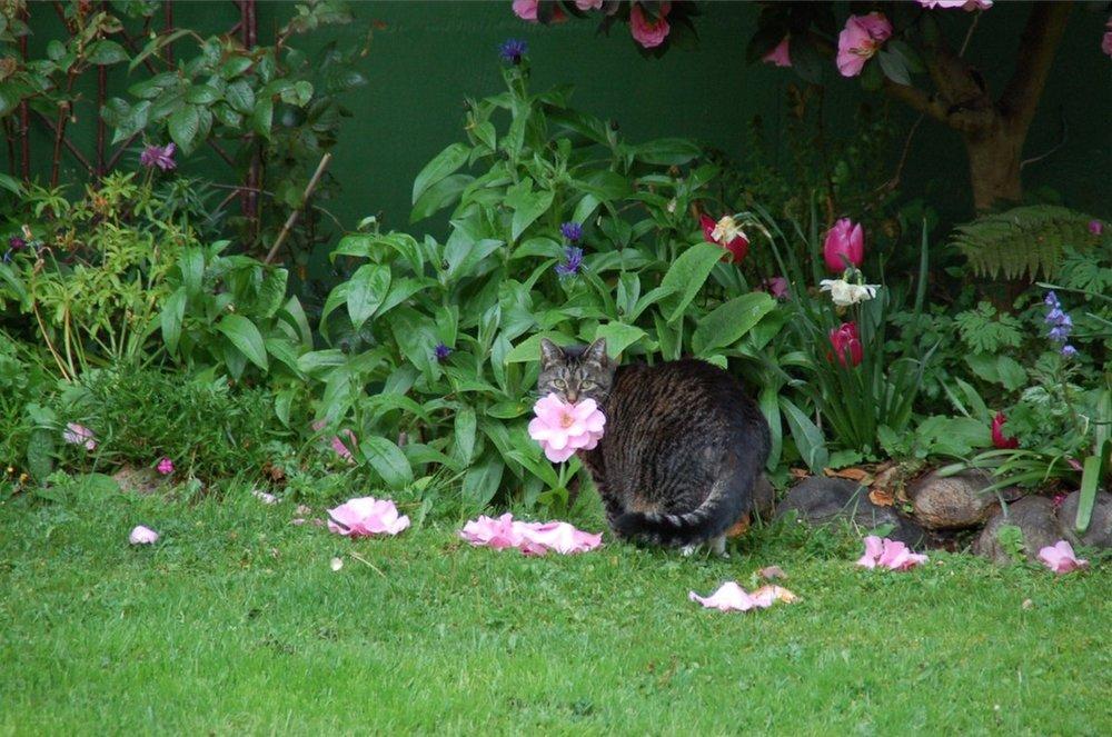 monday cat 1
