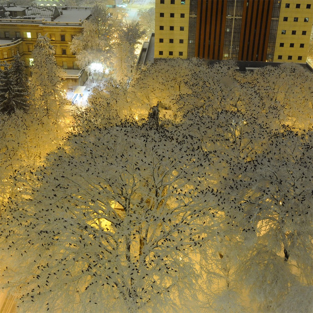 birds+atop+snowy+trees+portland.jpg