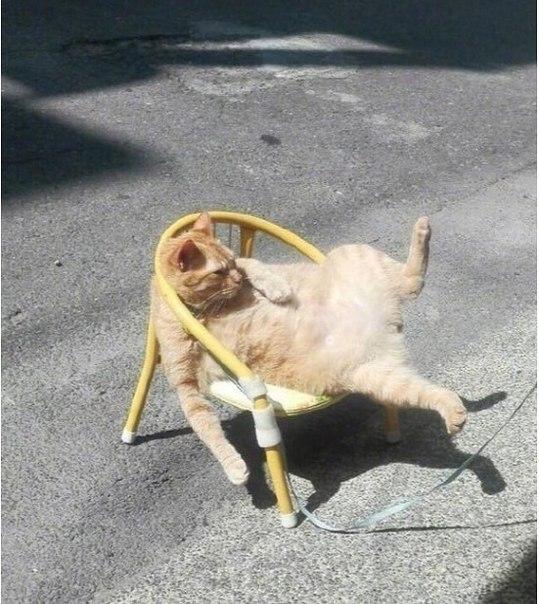 cat chill mood.jpg