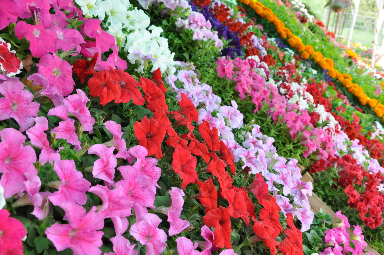 Annual Flowers Greenearth