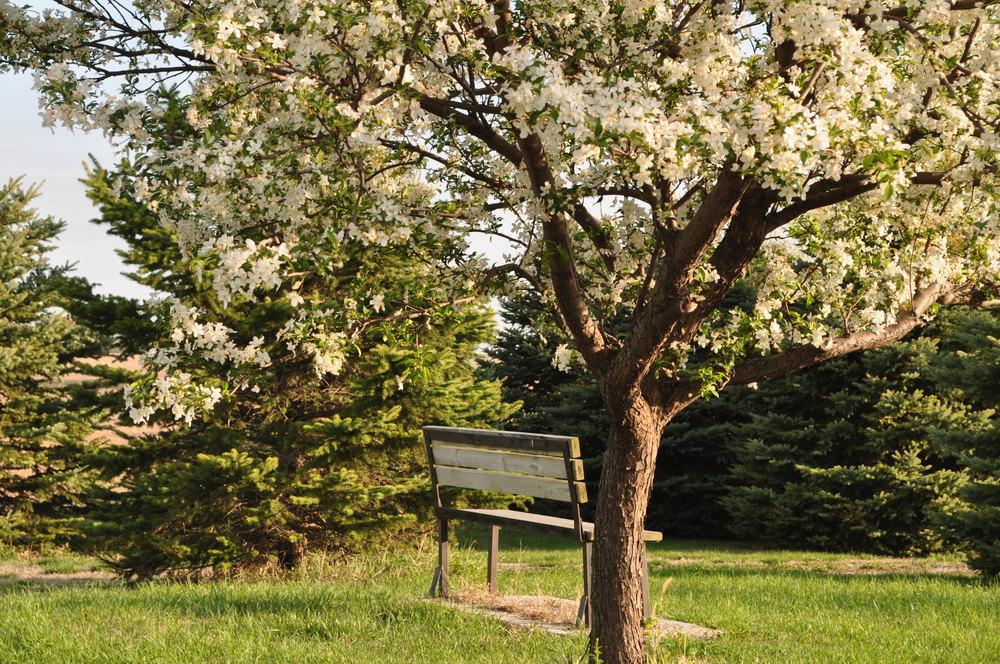 Spring Bench+Tree.JPG