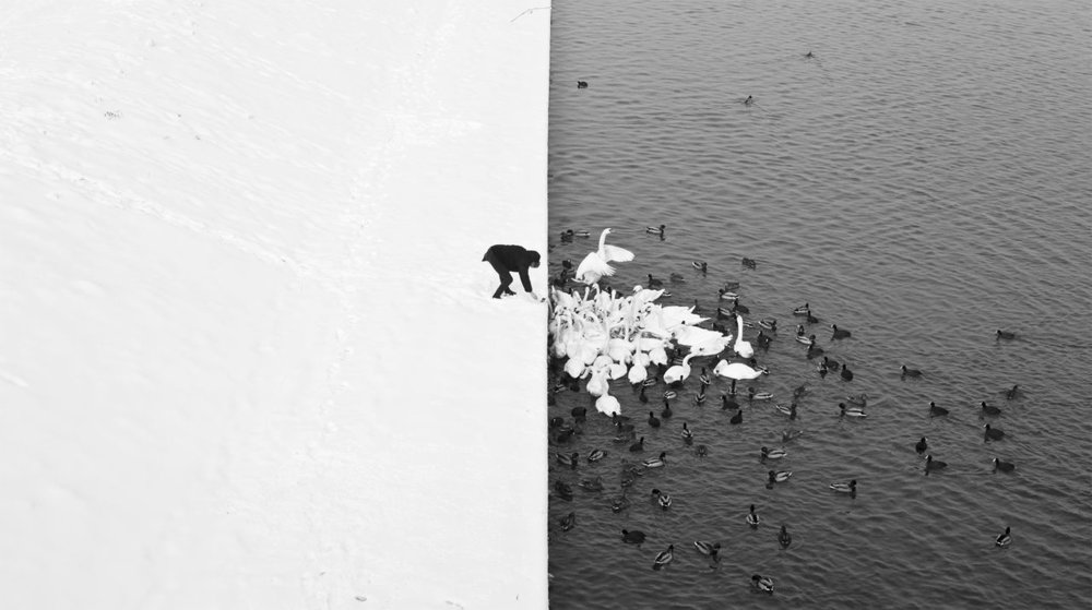 A man feeding swans and ducks from a snowy river bank in Krakow