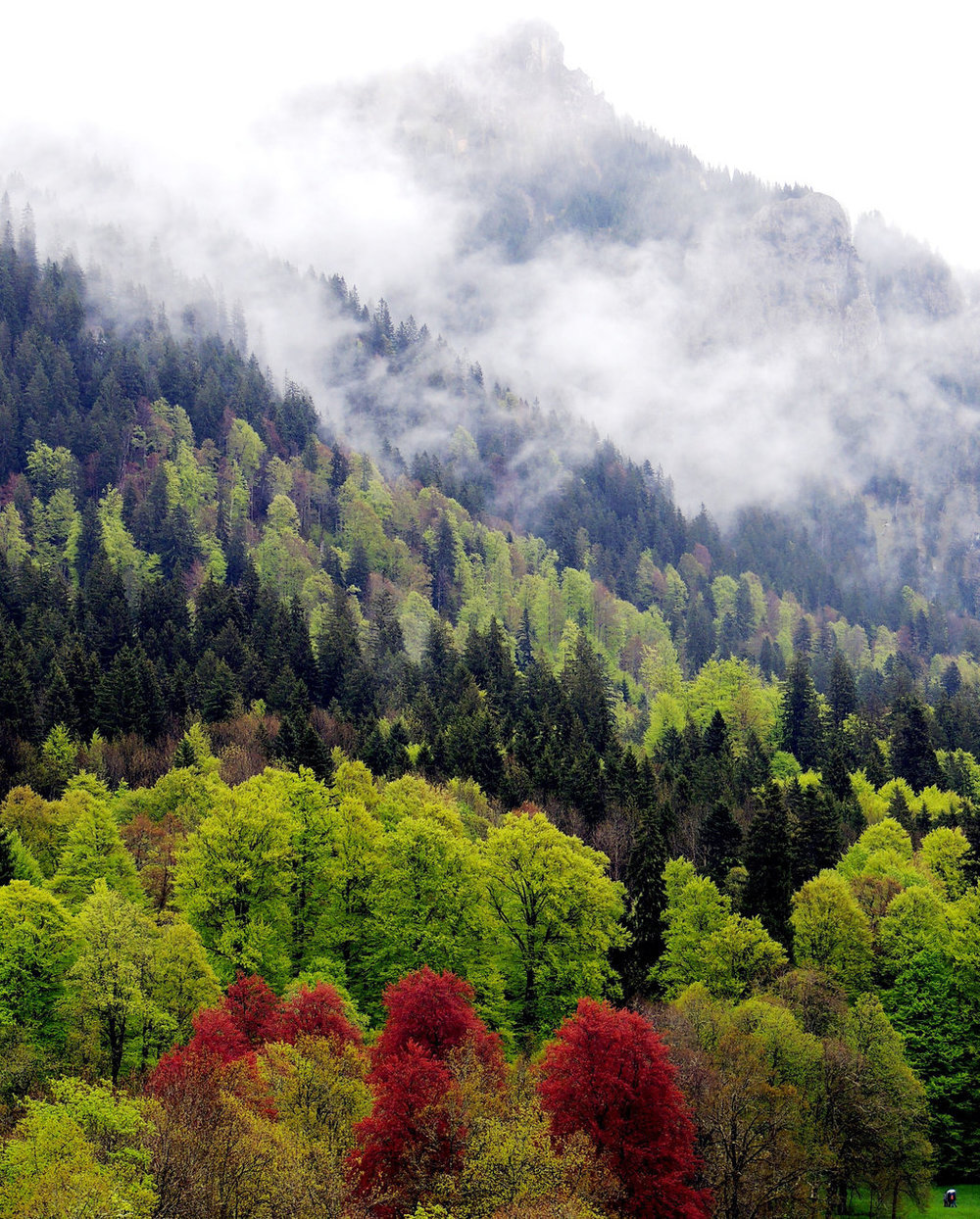 radivs :       ' In Bavaria '  by  Michel Ruiz Rosquete