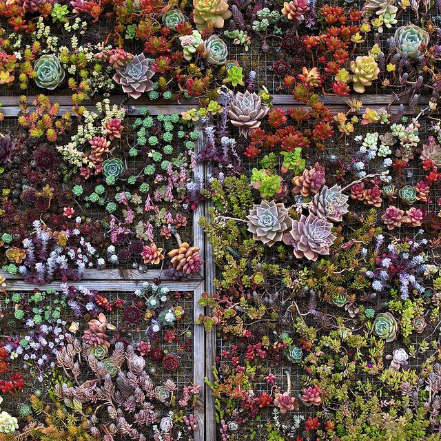 aubade :      thingssheloves :      Living Succulent Art  by  Ellen Soohoo  on Flickr.     hi  kynodontas  and  huntswoman