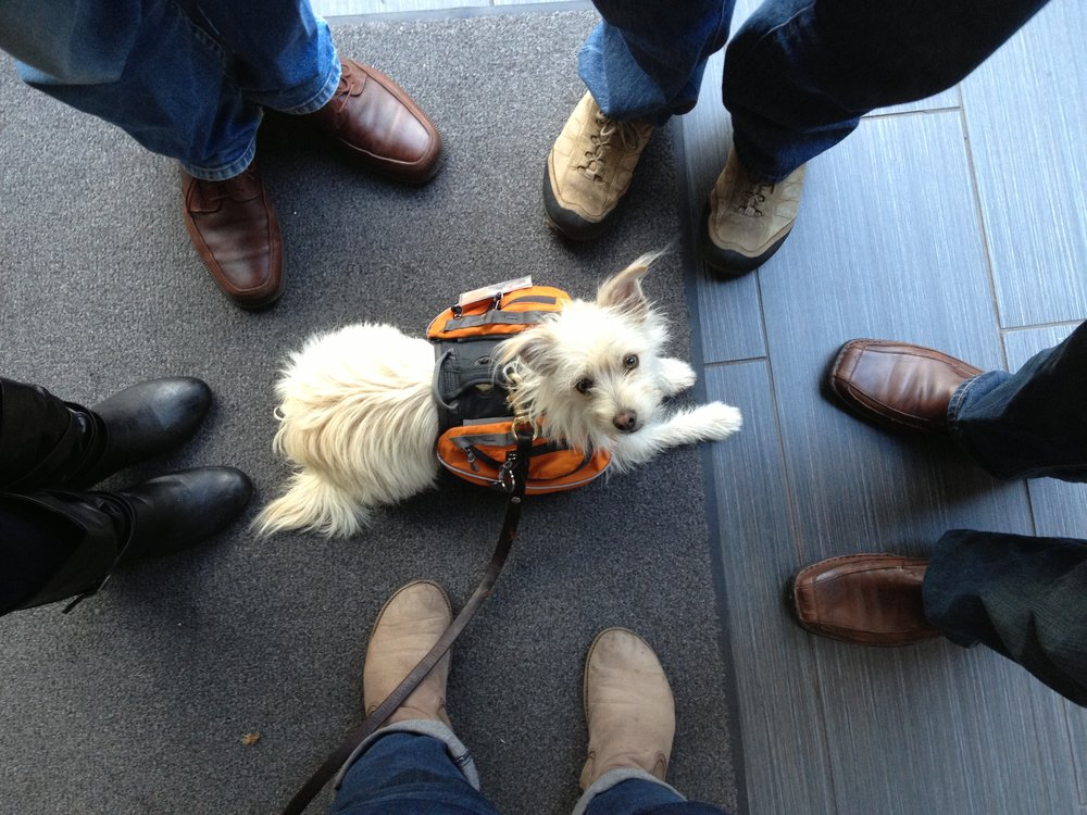 Shot from above, Chief, an adorable white service dog sits in the center of a group of people