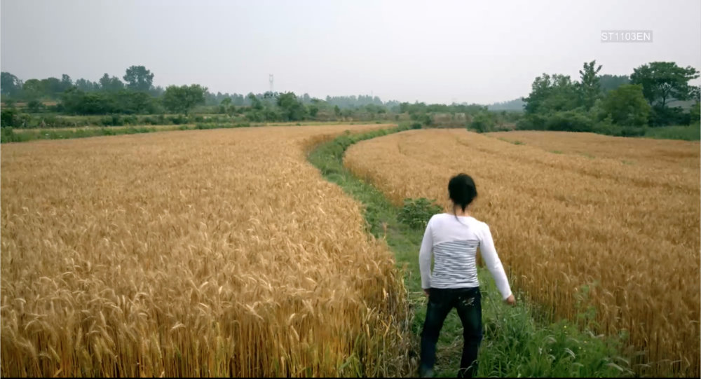 A figure walks away from the camera into an open wheat-field with a path down the middle.