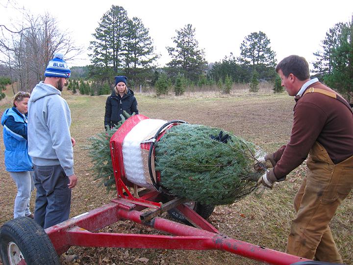 Bundling a tree
