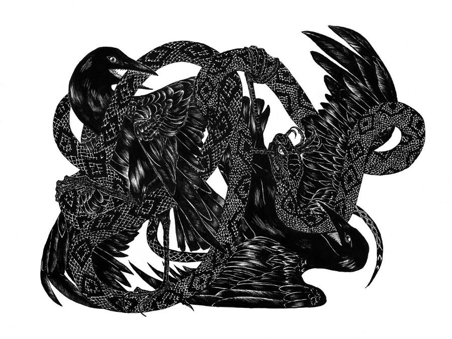 birdfight.jpg