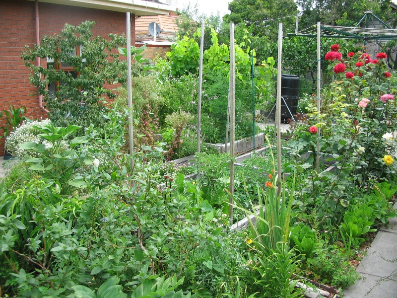Permaculture produces lush and diverse vegetation, not neat little rows of crops.