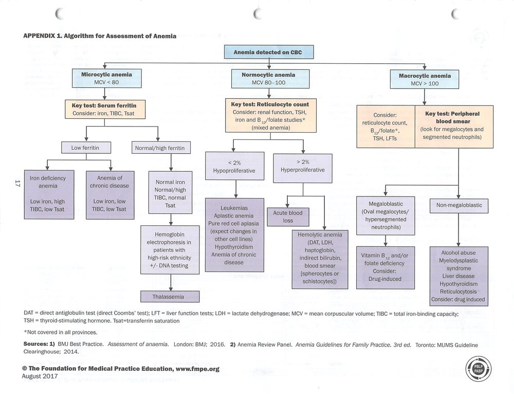 Algorithim for Assessment of Anemia.jpg