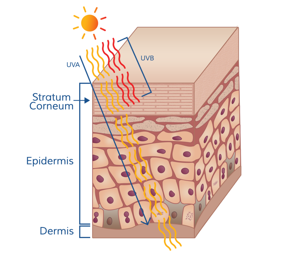 Ultraviolet radiation (UVR) from the sun is grouped into two categories based on wavelength: UVA (315 to 400 nm) and UVB (280-315 nm). The biological effects of each UVR are not identical because the mechanisms of how they interact with skin tissue differ.
