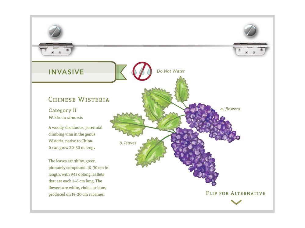 Invasive Plant Signage
