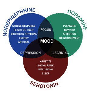 These are the main neurotransmitters that become depleted when the Stress Response System is activated long term