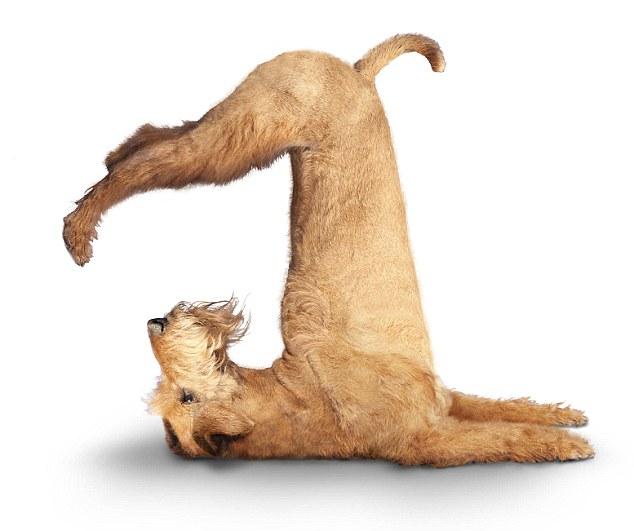 Yoga Dogs Clendar