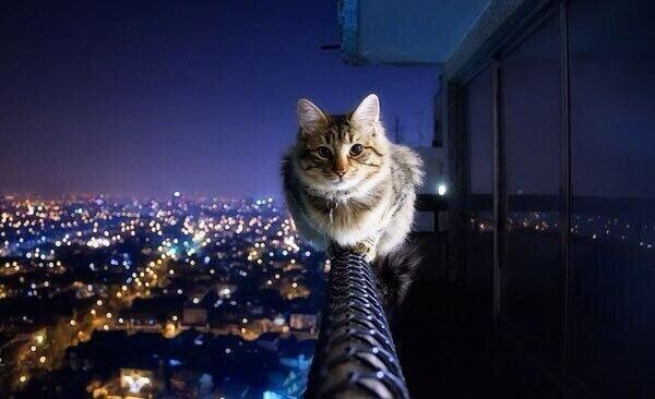 Cat without fear