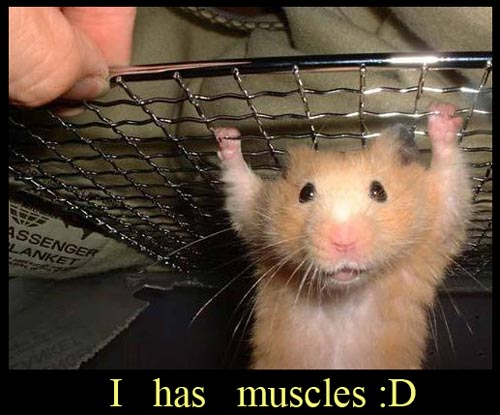 funny-strong-hamster-small-weight-lifting